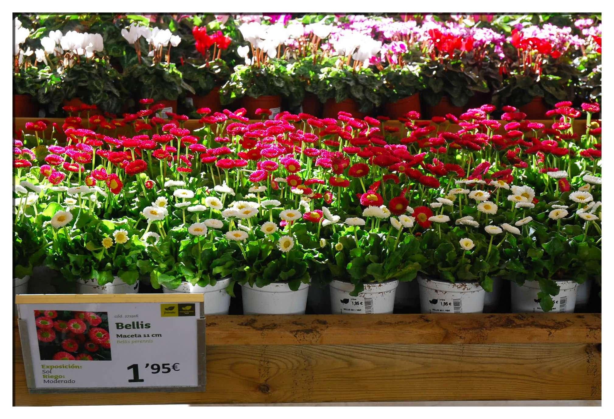 Invierno dulce el blog de fronda jardineria for Fronda decoracion