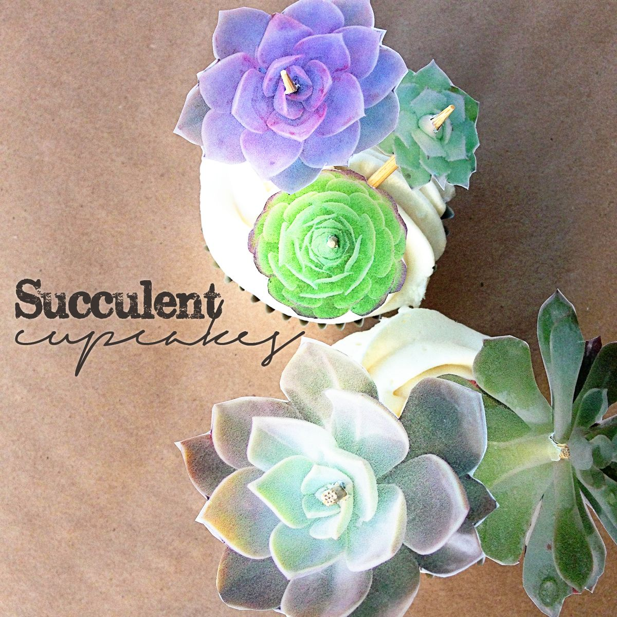 Succulent Cupcakes Know How She Does It