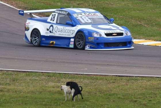 Copa Montana Denis Navarro Cachorro transando com cadela