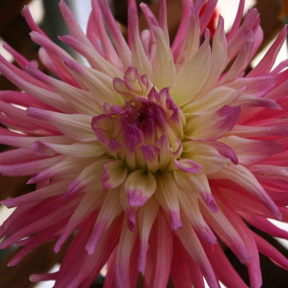 صور ورد - flowers photos