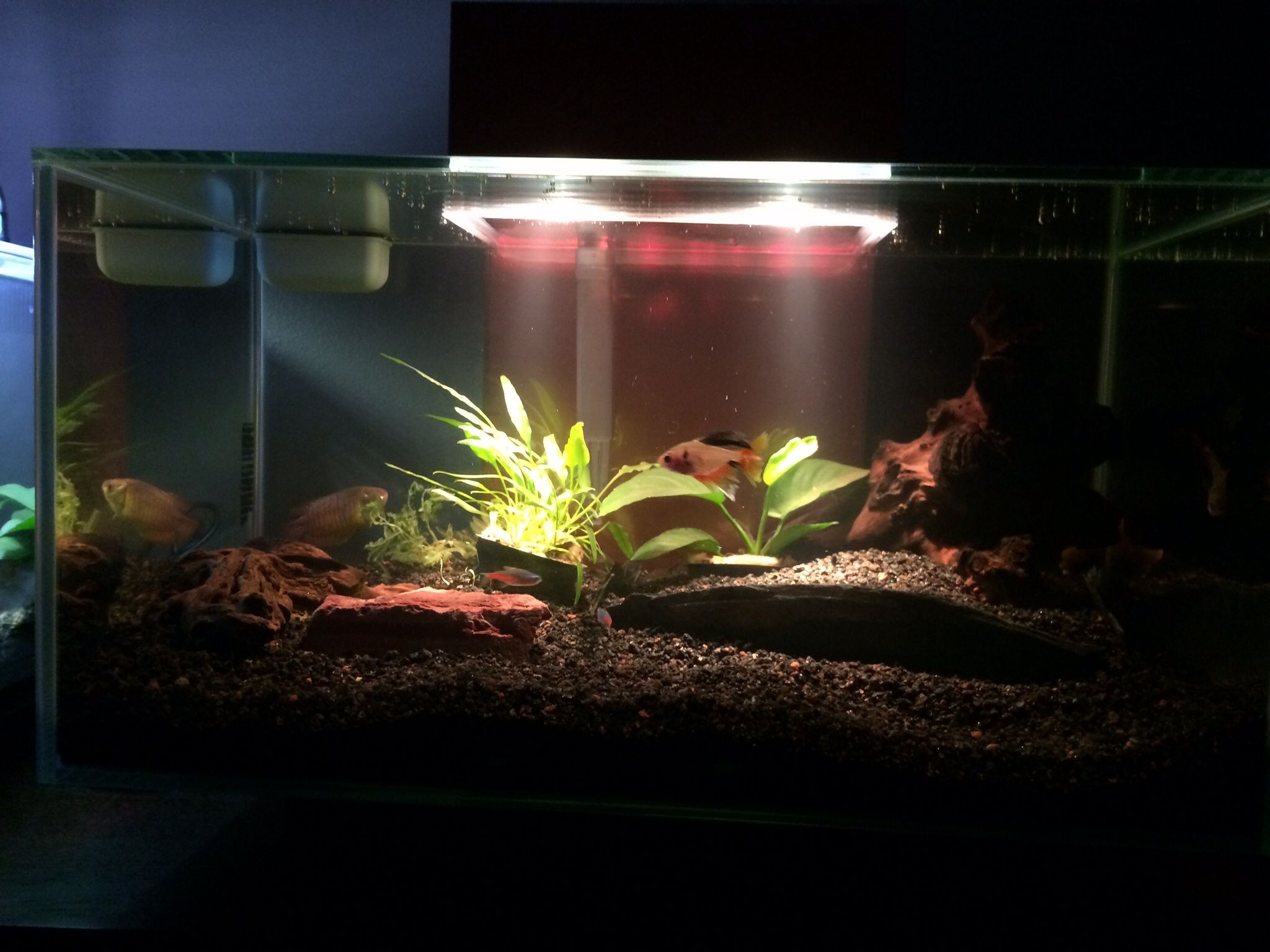 New Fluval Edge tank Need tips The Planted Tank Forum