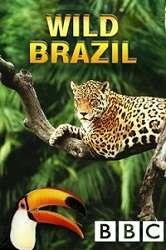 Thiên Nhiên Hoang Dã Brazil