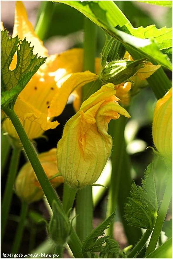 kwiat cukinii męski