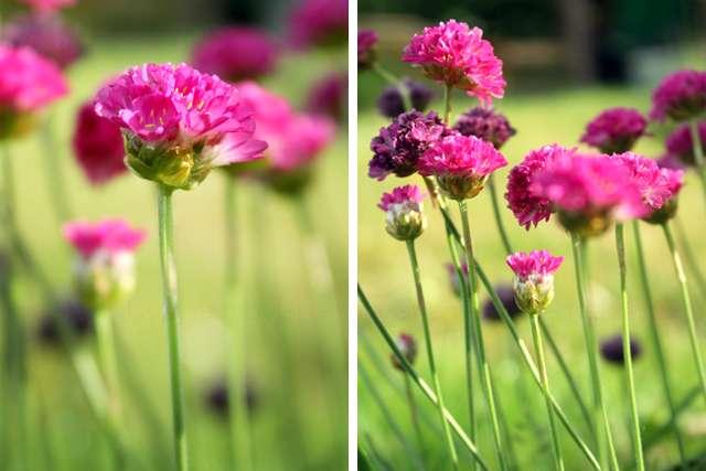 Natur Blumen pink
