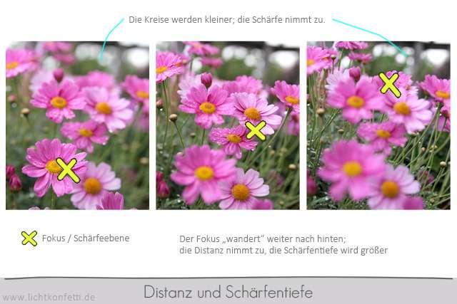 Foto-Kurs - Zusammenhang Distanz und Schärfentiefe - Beispielbilder