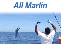 All Marlin