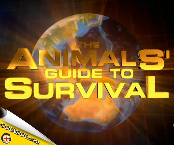 ცხოველების თვით გადარჩენის წესები (დოკუმენტური) ნაწილი 4