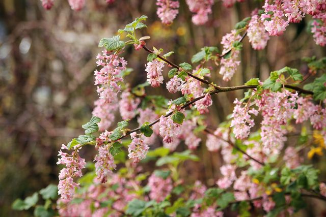 hello spring - nature macro