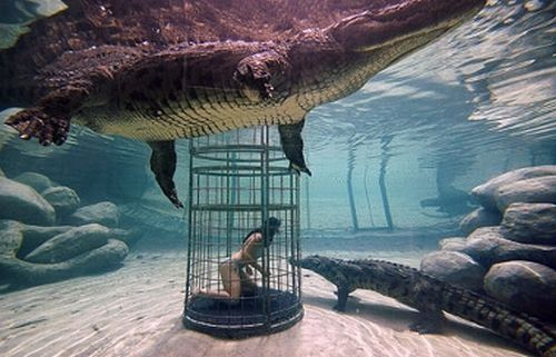 Gator cage diving