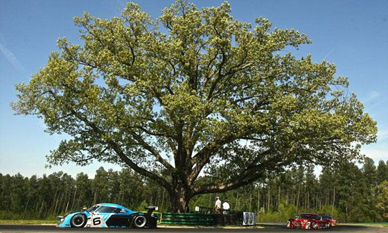 Oak Tree - Virginia International Raceway