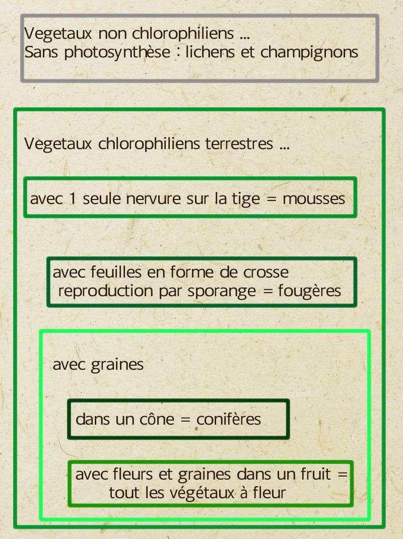 classification simplifiée végétaux