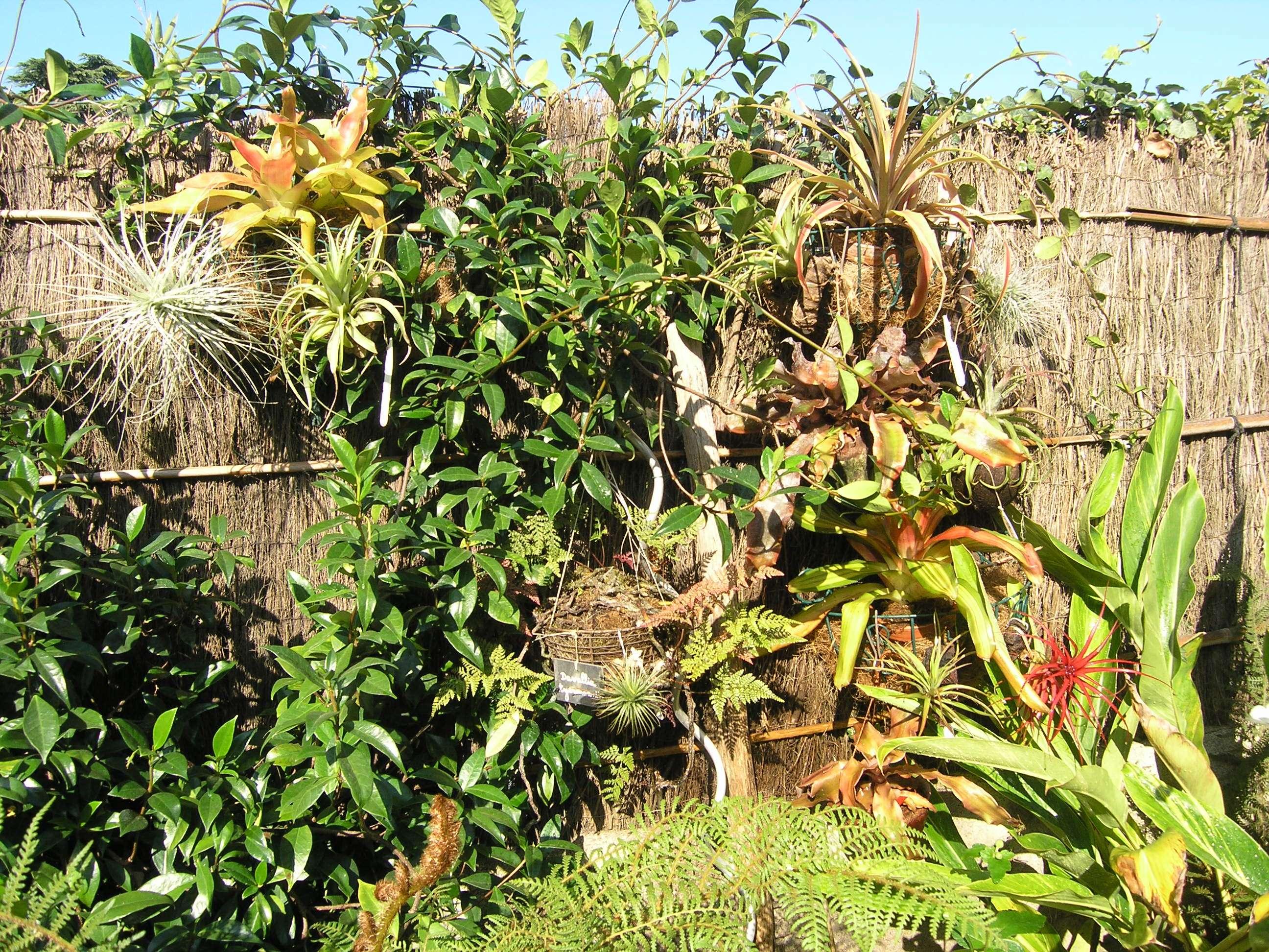 Les Broméliacées au jardin