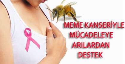Meme Kanserine karşı propolis