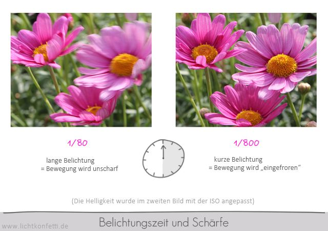 Foto-Kurs - Bewegungsunschärfe Blume - Belichtungszeit