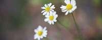Analoge Blumen
