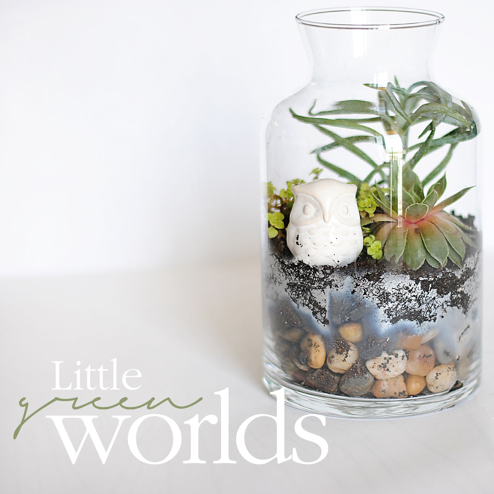 terrarium tutorial succulents