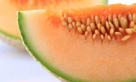 Melone cantaloupe di charentais 40 semi succoso sapore for Melone charentais