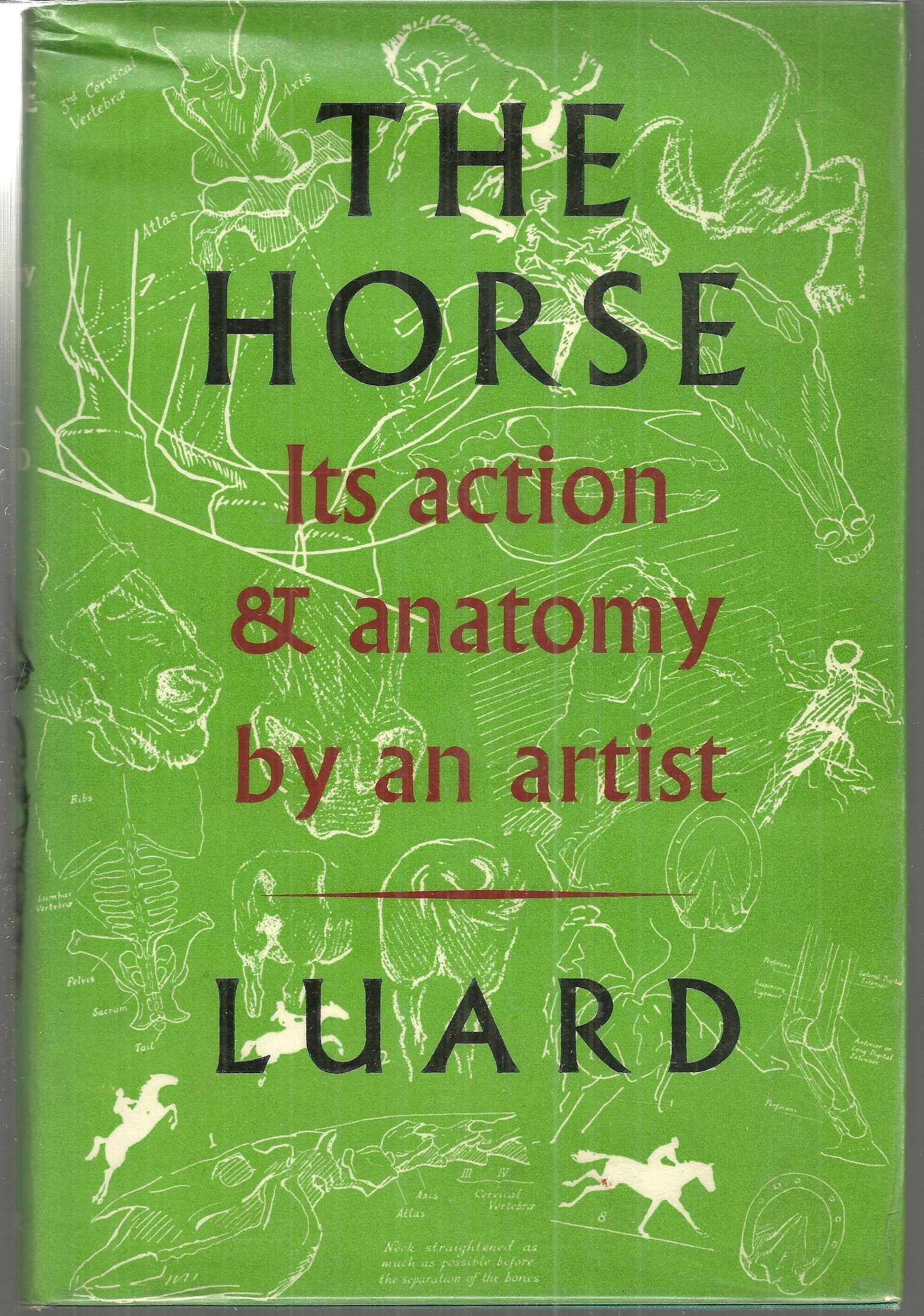 The Horse; It's Action and Anatomy by an Artist