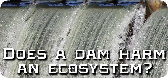Dam destroys ecosystem