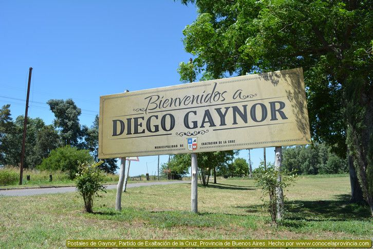 diego gaynor buenos aires