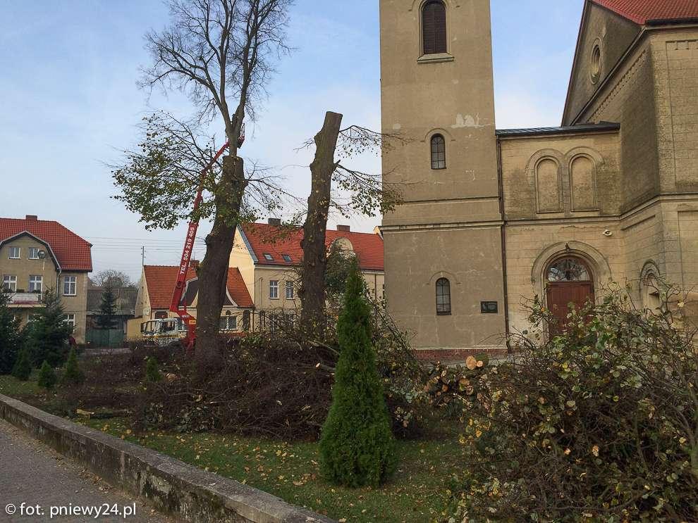 drzewa_kosciol