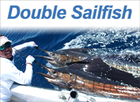 Double Sailfish