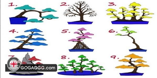 ტესტი: აირჩიე ხე და გაიგე, როგორი თანამშრომელი ხარ და რას ფიქრობენ შენზე კოლეგები