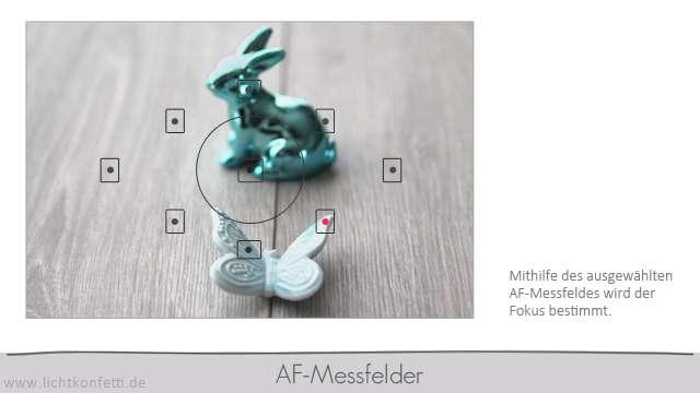 Foto-Kurs - AF-Messfelder - Canon - Sucherbild