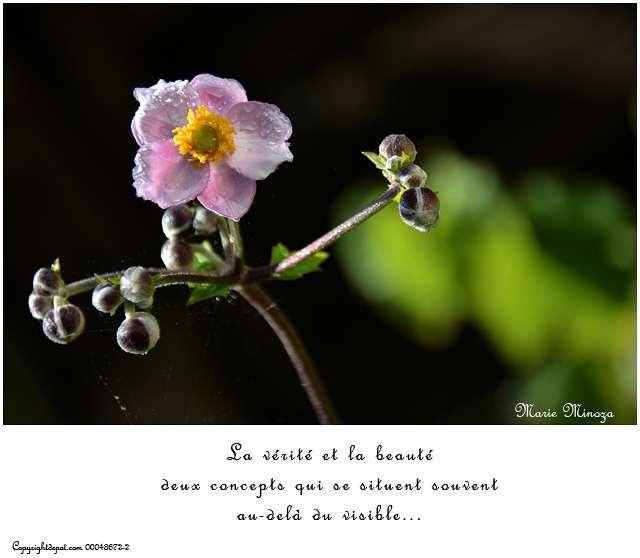 La vérité et la beauté