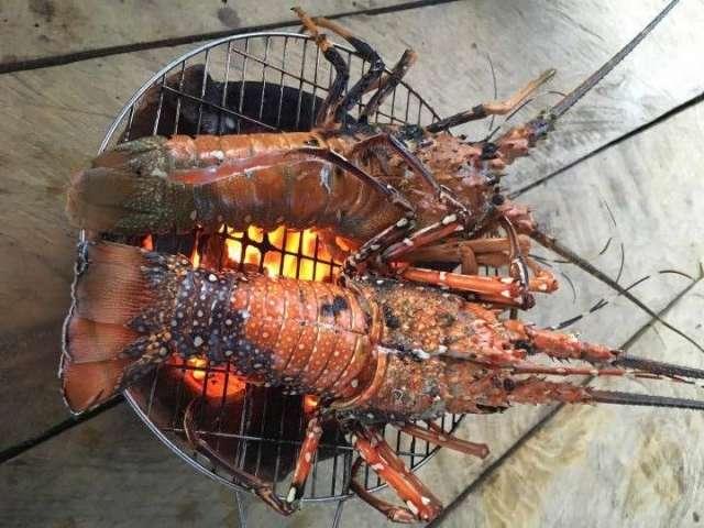 Bè nổi Vũng Rô, điểm đến vô cùng mới cho du lịch Phú Yên