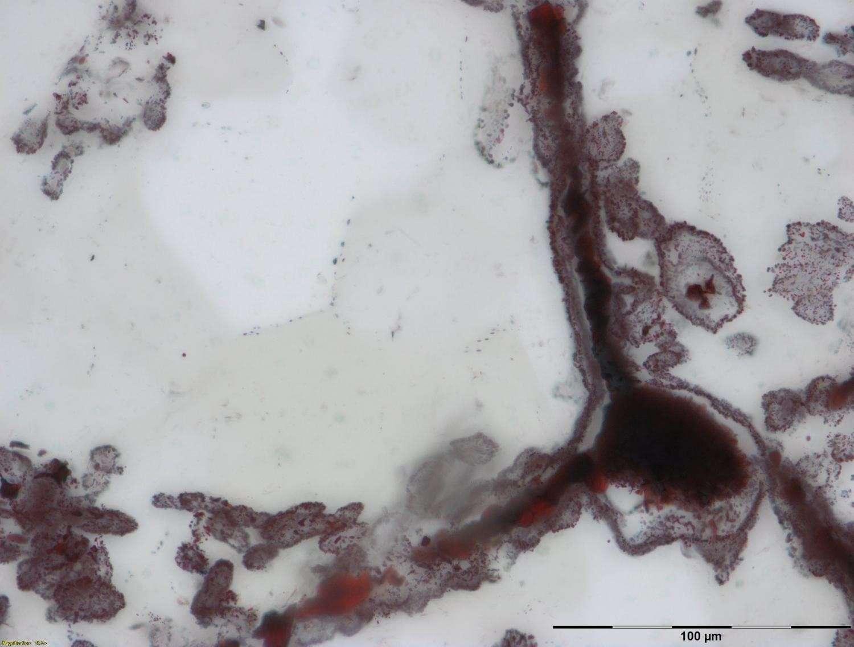 Figura 2.- Filamento de hematita asociado a actividad bacteriana en ventilas hidrotermales del fondo oceánico (similares a las asociadas a actividad biológica actual). Tomado de Dodd et al., 2017.