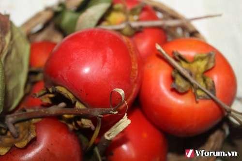 Bài thuốc chữa bệnh trĩ từ vỏ quả hồng