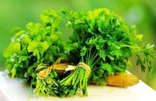 Bật mí cách trị thâm môi với rau mùi bạn không thể bỏ qua