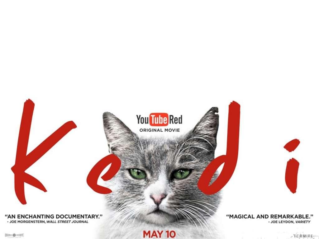 Οι Γάτες της Κωνσταντινούπολης (Kedi) Quad Poster Πόστερ