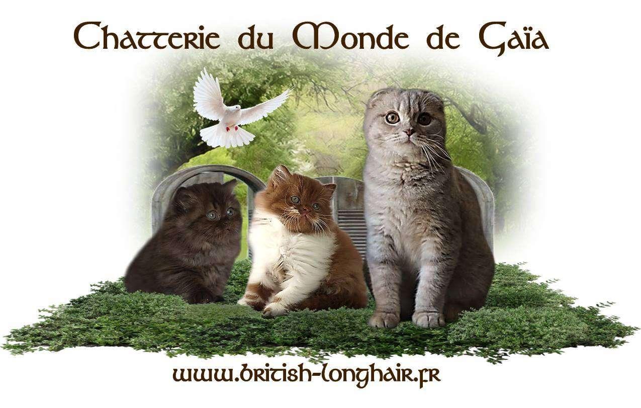 Chatterie du Monde de Gaïa