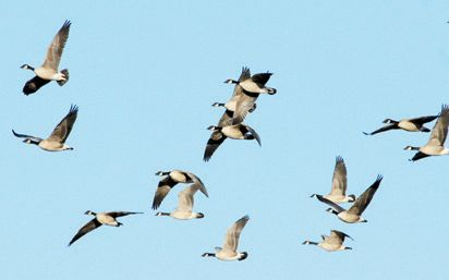 Washita Refuge Offers Waterfowl Hunts