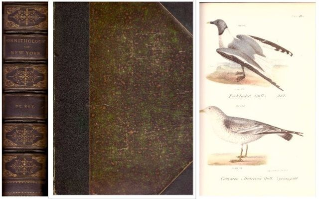 Zoology of New York: Or, the New-York Fauna- Comprising Detailed Descriptions of All the Animals Hitherto Observed Within the State of New-york, Part 2: Birds, James E. De Kay