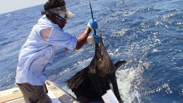 Roger bowgen costa rica fishing report from fishingnosara for Davy jones locker fishing
