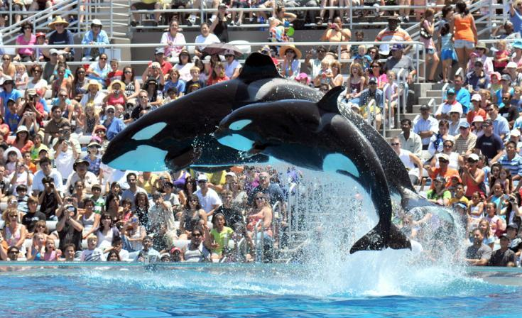 Ex-SeaWorld manager accused of embezzlement