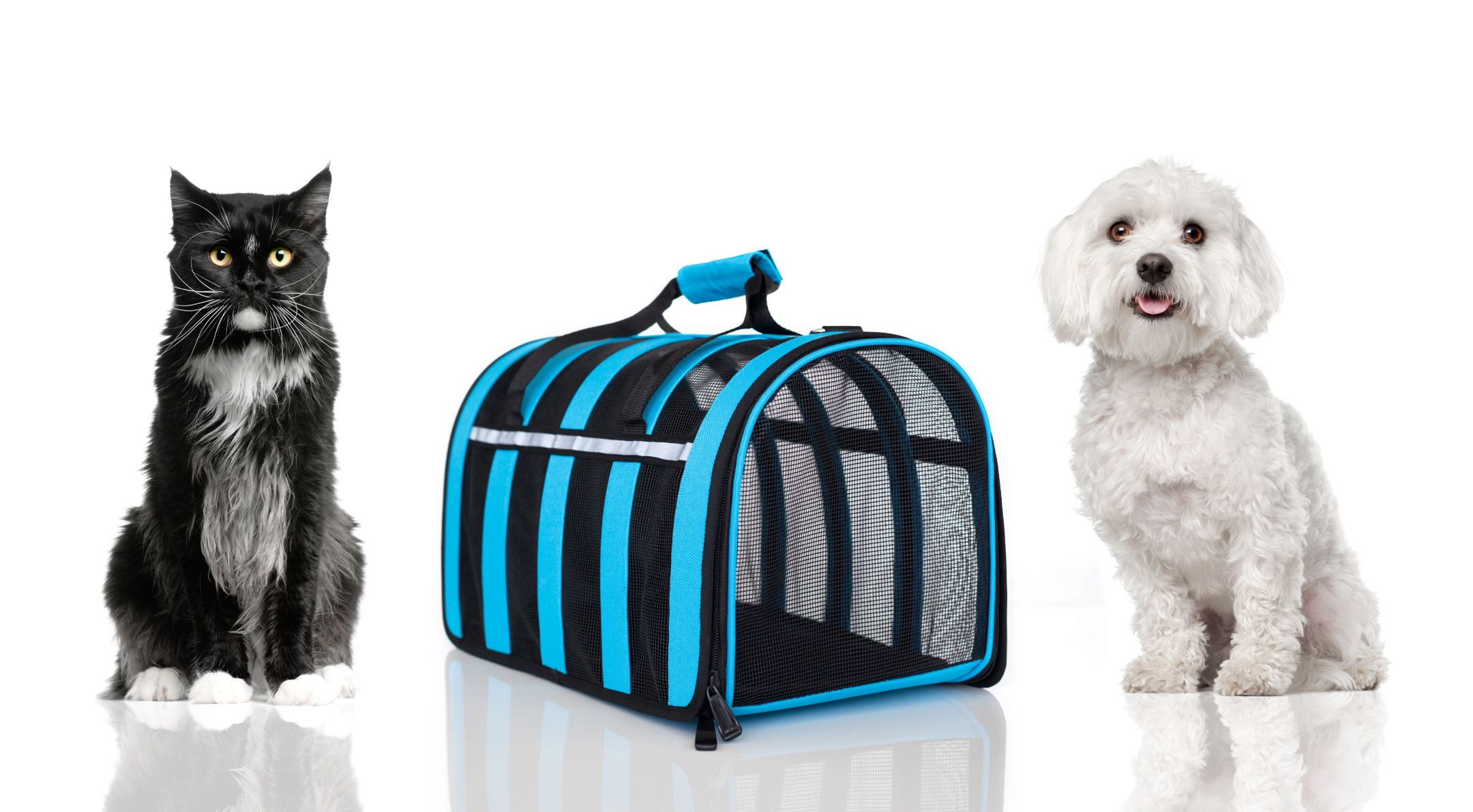 tragetasche transporttasche f r kleine hunde und katzen bis ca 6 kg in blau ebay. Black Bedroom Furniture Sets. Home Design Ideas
