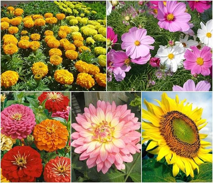 แนะนำดอกไม้ปลูกง่าย 5 ชนิด