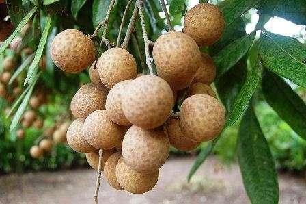 Một số loại trái cây cần tránh ăn nếu muốn mặt sạch mụn