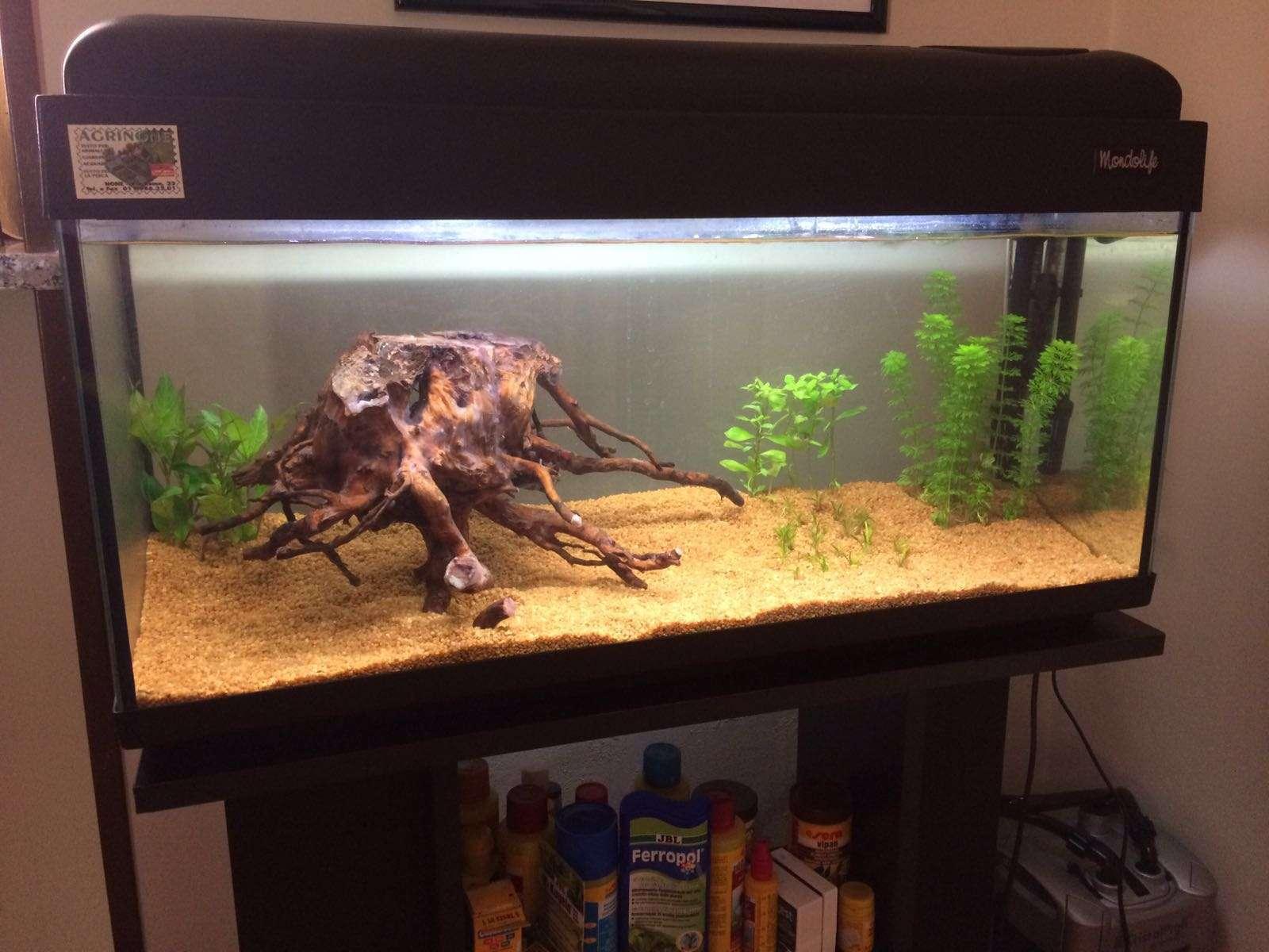 Primo acquario litri forum acquariofilia facile