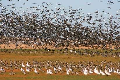 Washita Refuge Waterfowl Hunt Dates Set