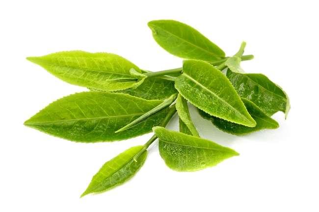 Sử dụng lá trà xanh để phòng chống nắng cực hiệu quả
