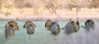 Talk Wild Turkey at Field Day June 15