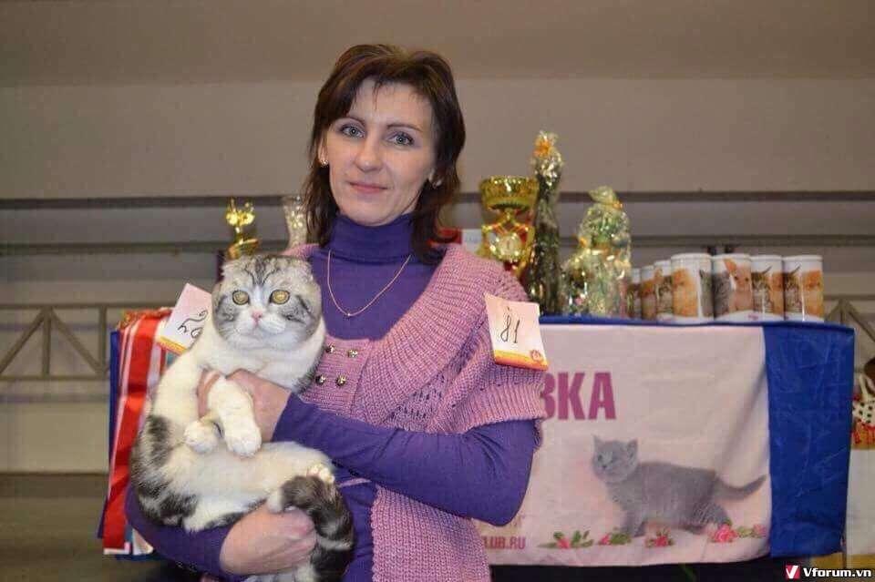 Nhận đặt gạch đàn mèo Scottish tai cụp, silver tappy, bicolor - 3