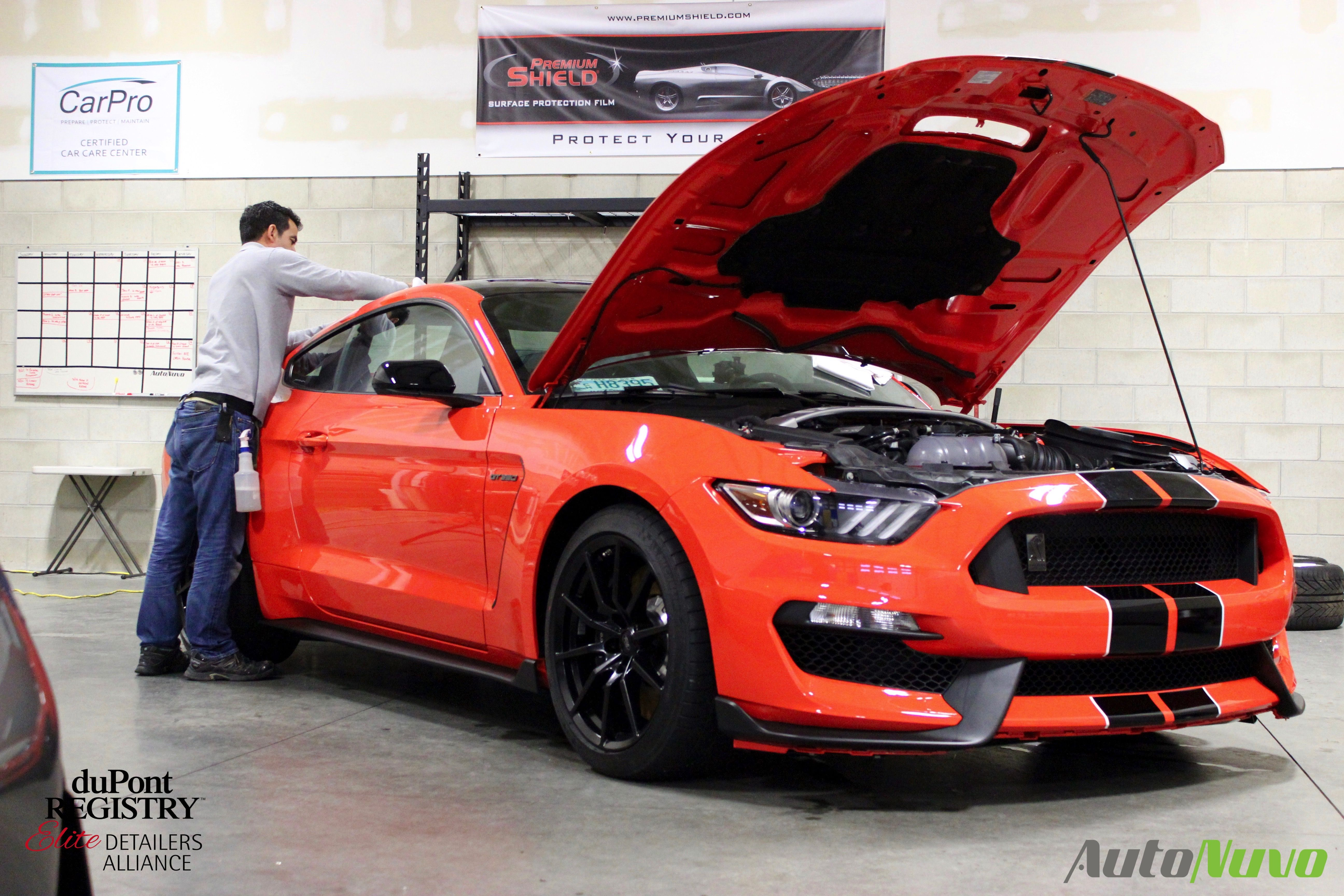 Autonuvo 2016 Ford Mustang Shelby Gt350 Paint Correction