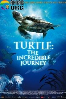 HC3A0nh-TrC3ACnh-VC4A9-C490E1BAA1i-CE1BBA7a-LoC3A0i-RC3B9a-Turtle-The-Incredible-Journey-2009
