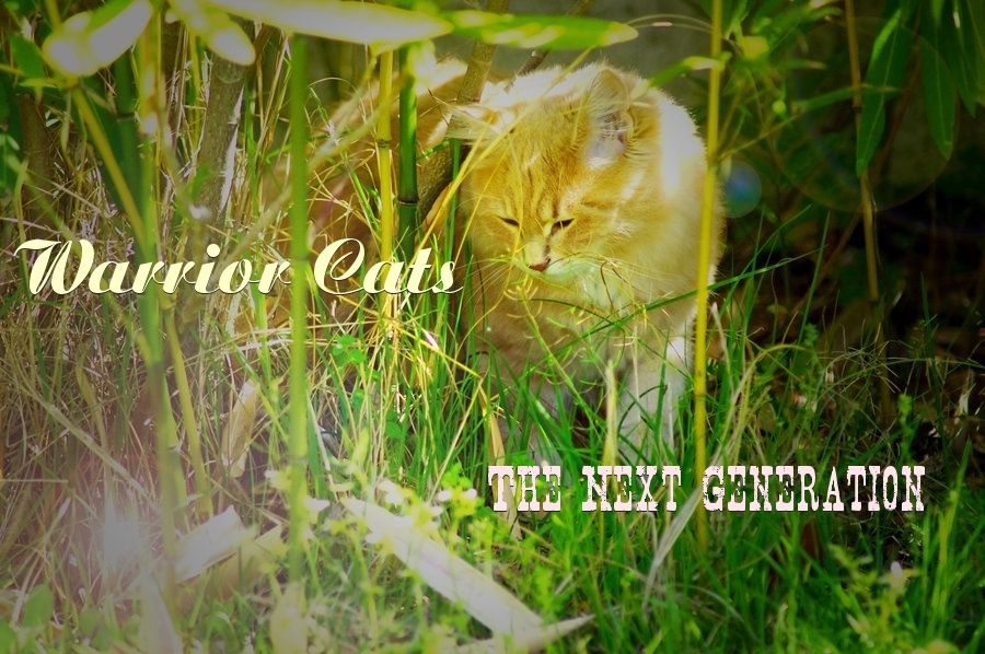 Warrior Cats, Next Generation